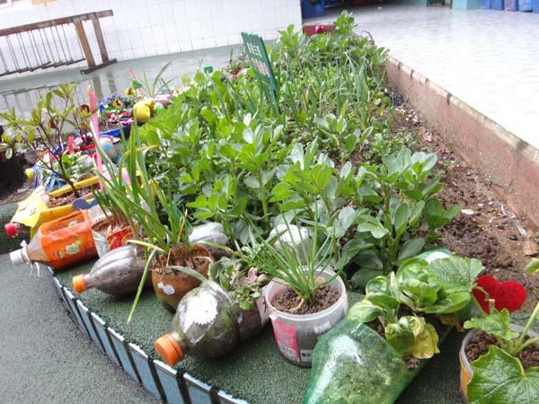 幼儿园自然角照顾植物步骤图